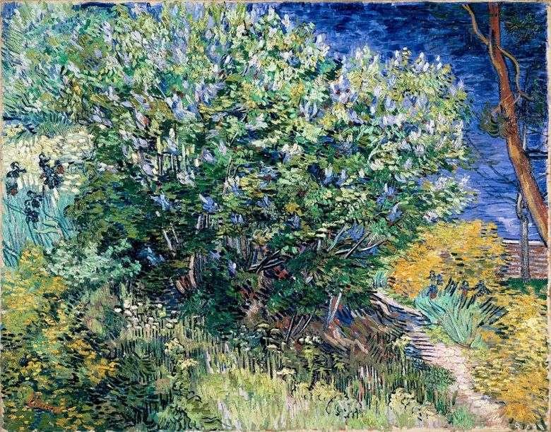 Lilac Bush Vincent Van Gogh Van Gogh Vincent